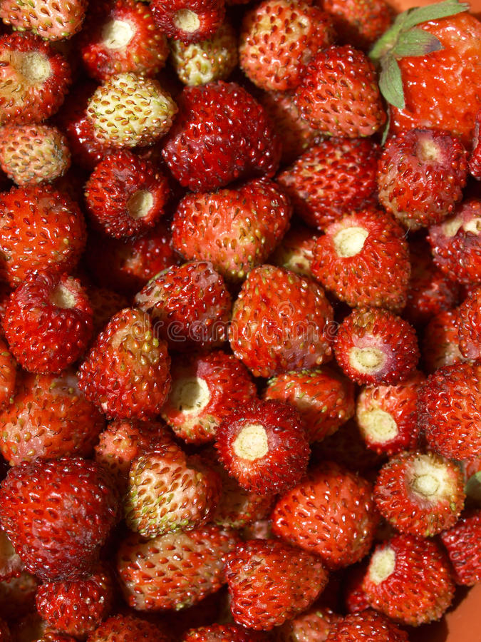 Strawberries. Strawberry fruit useful as a food background royalty free stock photo