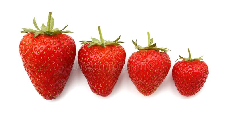 Strawberries. Four strawberries of decreasing size from big to small royalty free stock photo