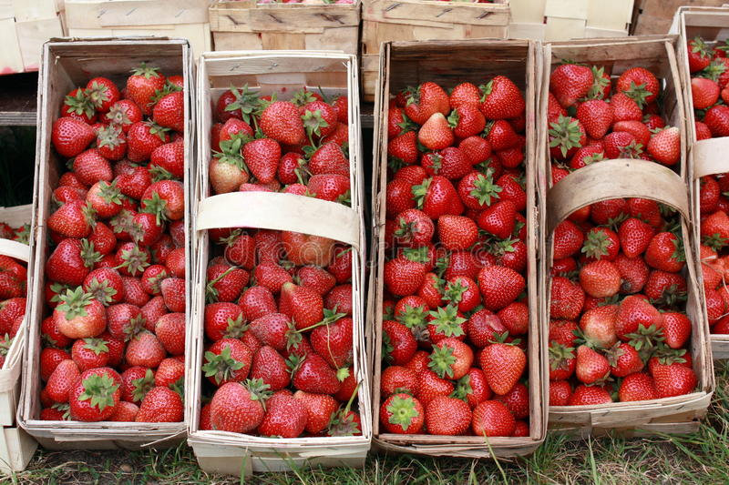 Download Strawberries stock photo. Image of green, health, mellow - 14851778