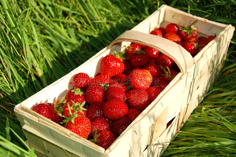 Download Strawberries stock image. Image of food, poland, plenty - 14858263