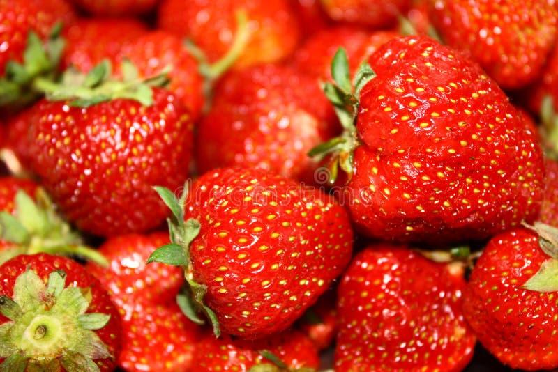 Download Strawberries stock photo. Image of strawberry, garden - 20076170