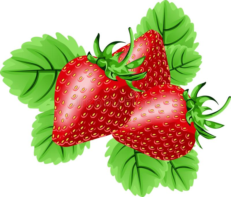 Download Strawberries stock illustration. Image of isolated, fresh - 23457496