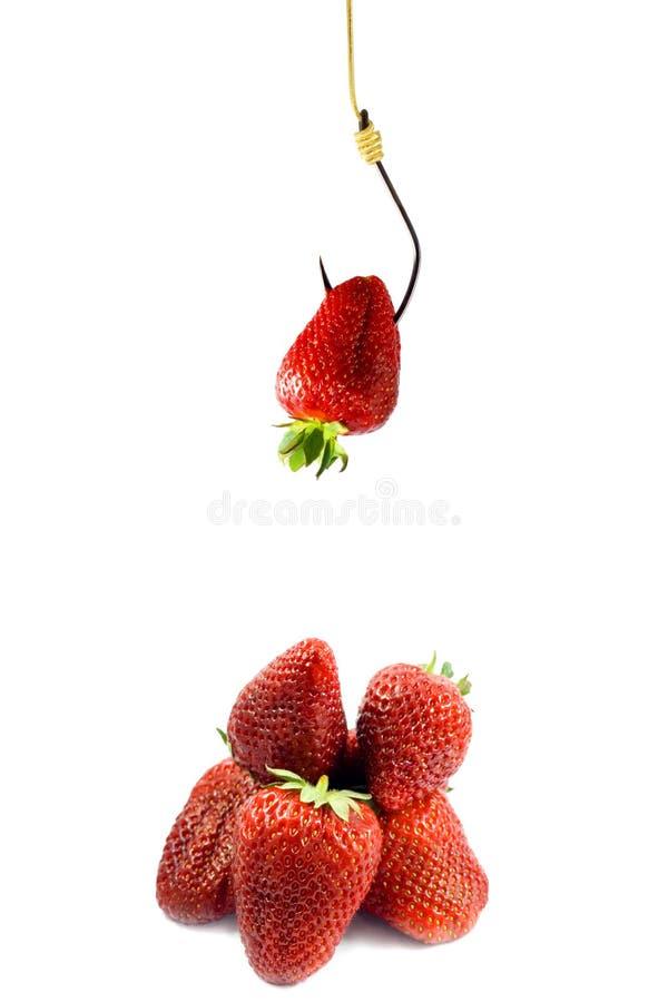 Strawberries bait stock photo