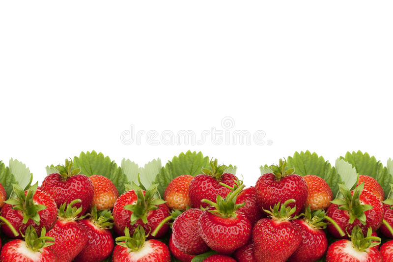 Download Strawberries border. stock photo. Image of isolated, berry - 14861482