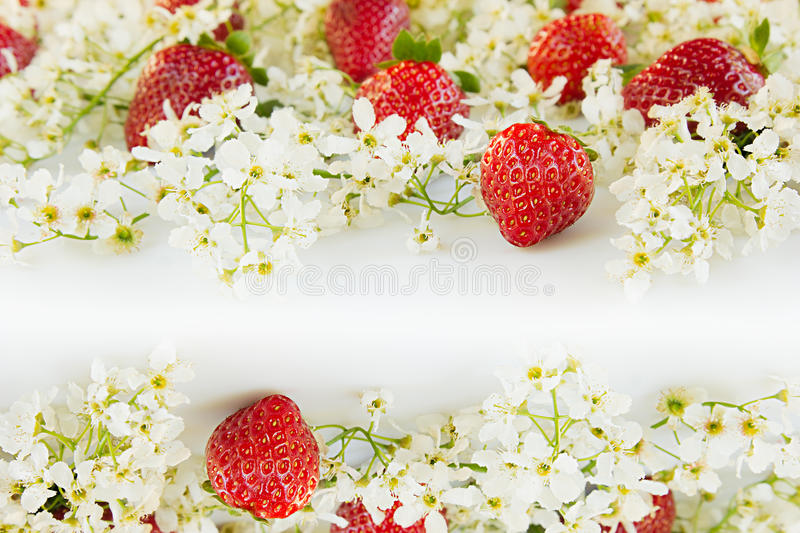 Strawberries with flowers of bird cherry on a white background. Sunny spring background. Border with the copy space. royalty free stock images