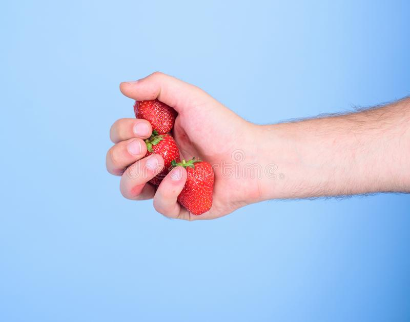 Strawberries fresh gathered harvest in male fist close up. Hand holds red sweet ripe berries blue background. Squeezing. Fresh strawberry juice. Fresh juice stock photo
