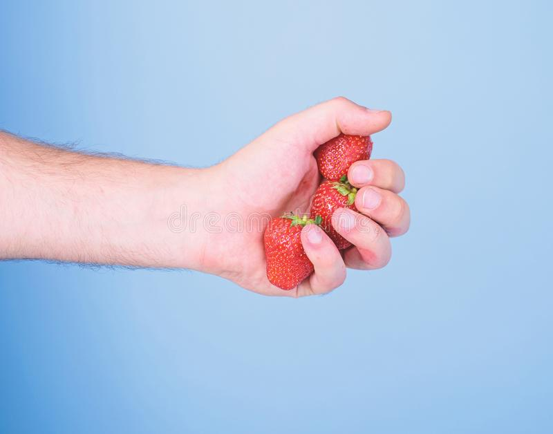 Strawberries fresh gathered harvest in male fist close up. Hand holds red sweet ripe berries blue background. Squeezing. Fresh strawberry juice. Fresh juice stock photography
