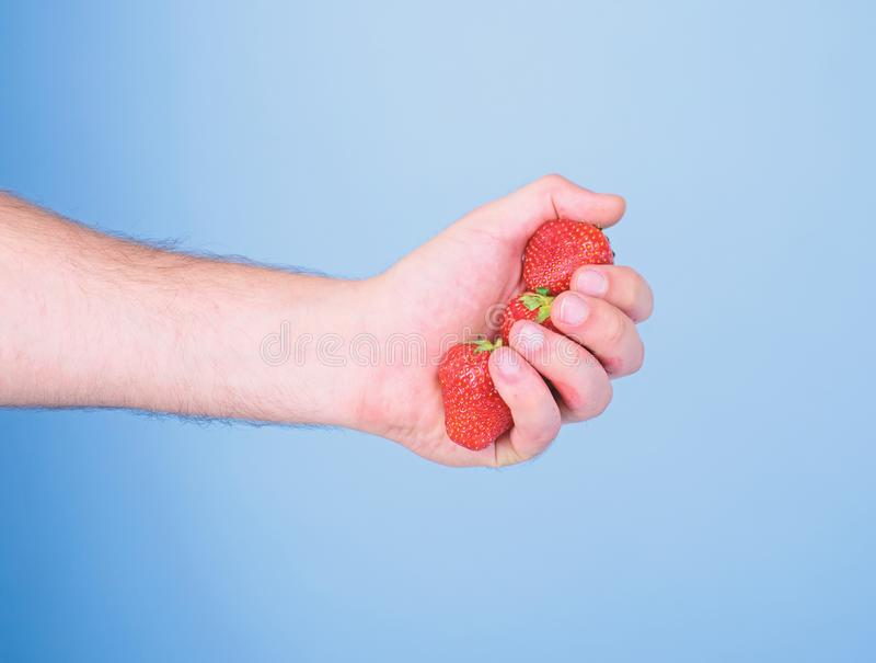 Strawberries fresh gathered harvest in male fist close up. Producing fresh strawberry juice. Hand holds red sweet ripe. Berries blue background. Squeezing fresh royalty free stock photography