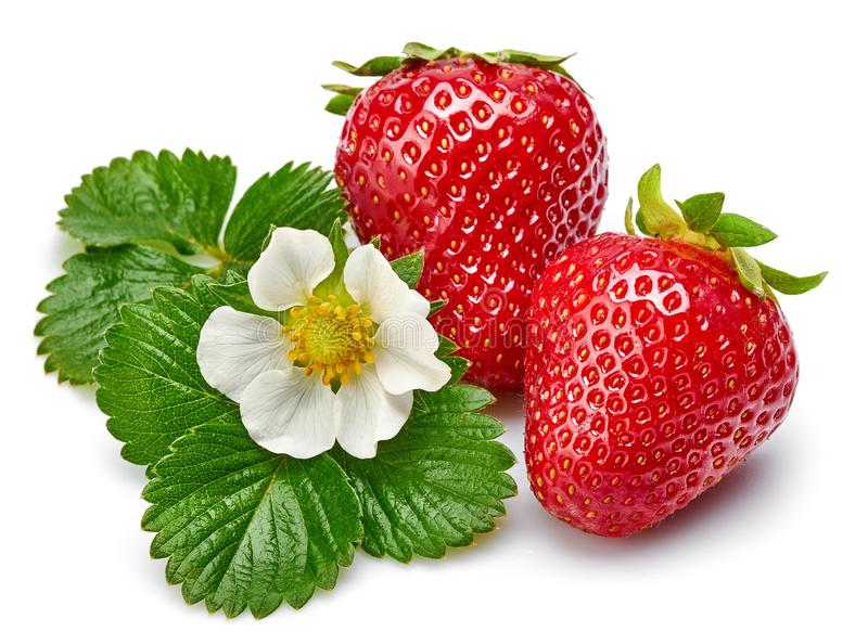 Strawberries with green leaf and flowers isolated royalty free stock image