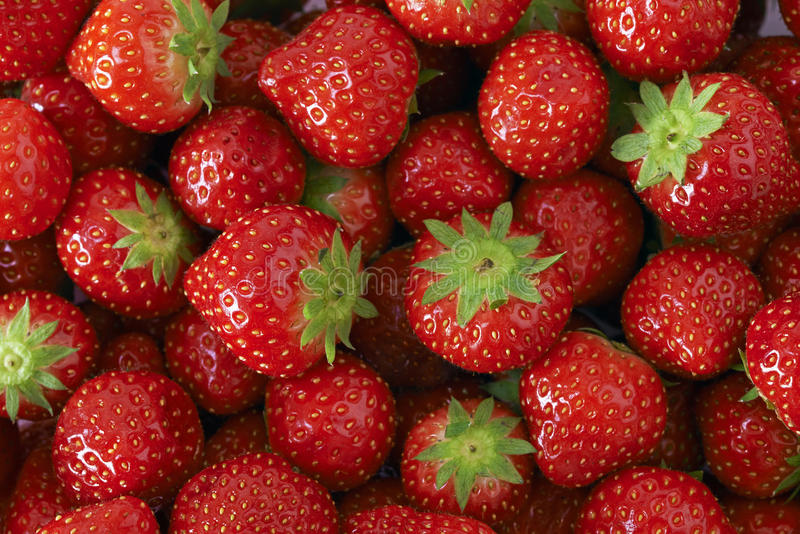 Strawberries grouped. All together stock photography