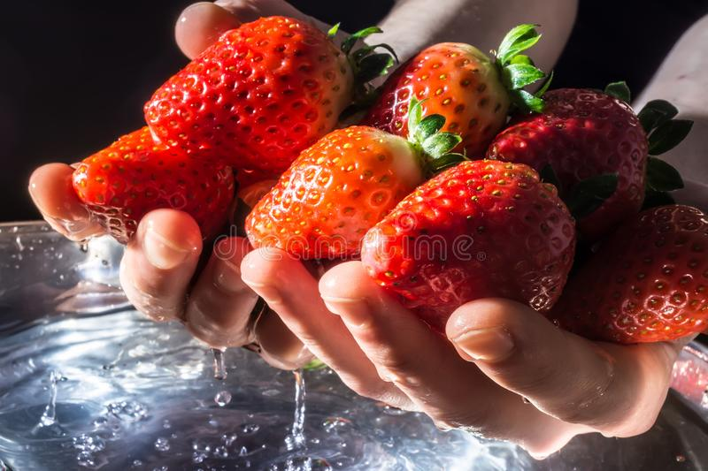 Strawberries in hands rising from the water close-up on dark background in the rays of the sun. Strawberries in hands rising from the water close-up on a dark stock photos