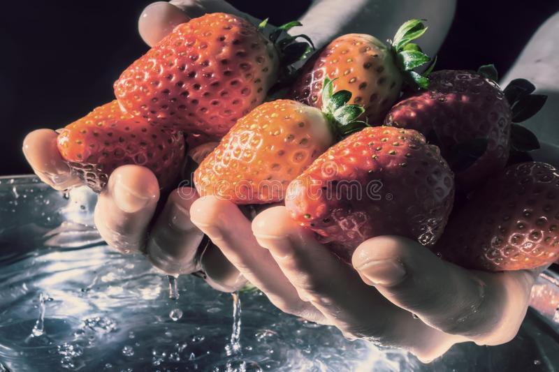 Strawberries in hands rising from the water close-up on a dark background in the rays of the sun. Old retro style photo. Strawberries in hands rising from the royalty free stock image