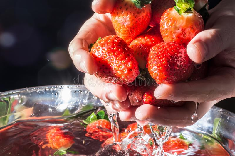 Strawberries in hands rising from the water close-up on a dark background in the rays of the sun. Strawberries in hands rising from the water close-up on dark stock photo