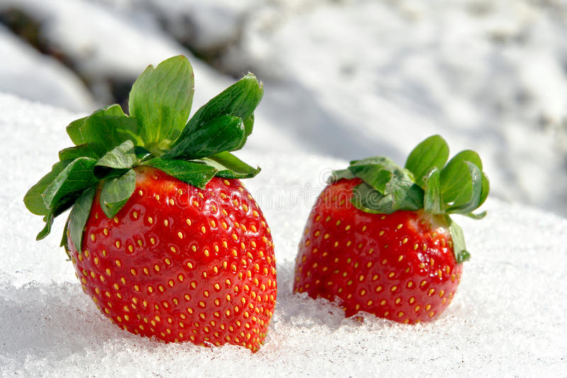 Strawberries On Ice In Cold White Winter Royalty Free Stock Photo