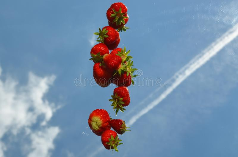 Strawberries laid in a row on a mirror with reflection of clouds and a trace from the plane stock photos
