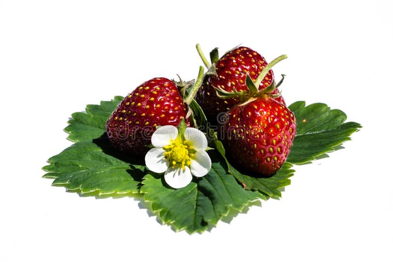 Strawberries with leave isolated on white background stock images
