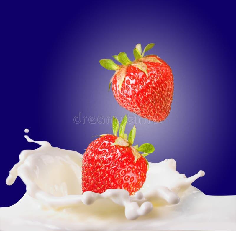 Strawberries & milk royalty free stock photo