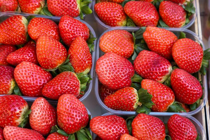 Strawberries in plastic baskets at the market with a soft focus field stock images