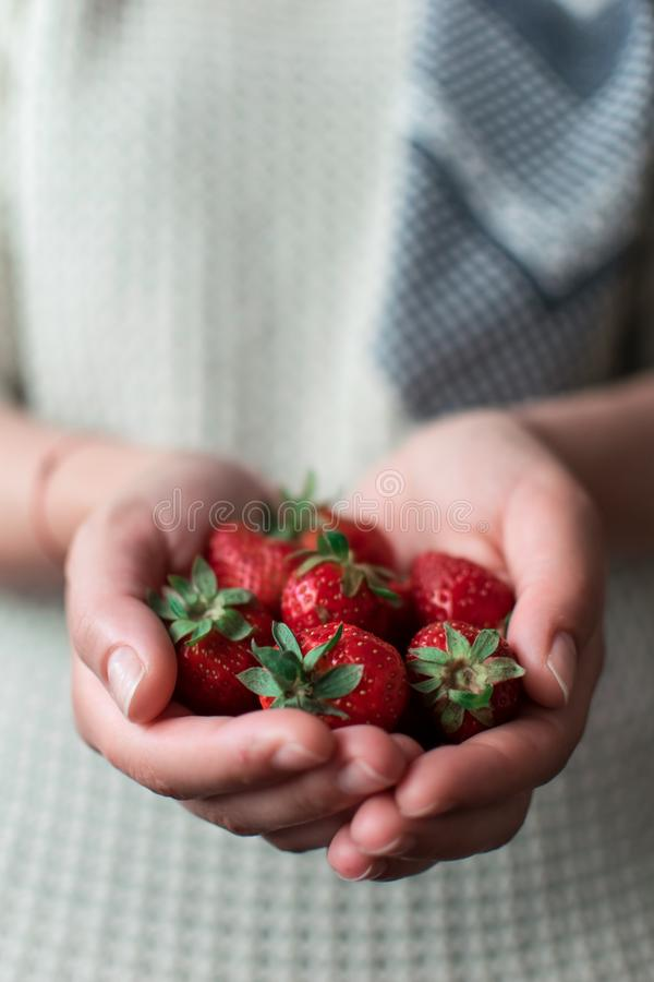Strawberries in the woman`s hands. royalty free stock photography