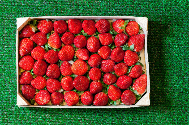 Strawberries in a wooden box on grass stock image