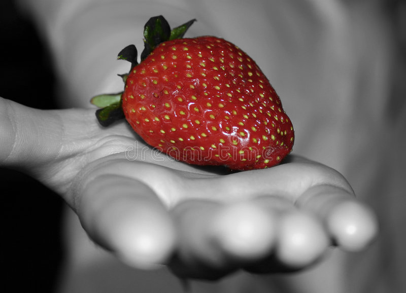 Download Strawberry stock photo. Image of giving, strawberry, berry - 6902