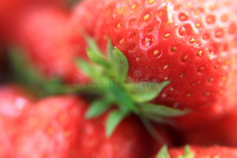 Download Strawberry Stock Photos - Image: 10014003