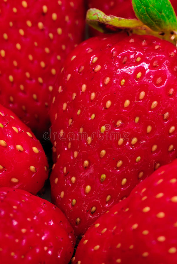 Download Strawberry Royalty Free Stock Photo - Image: 12008115