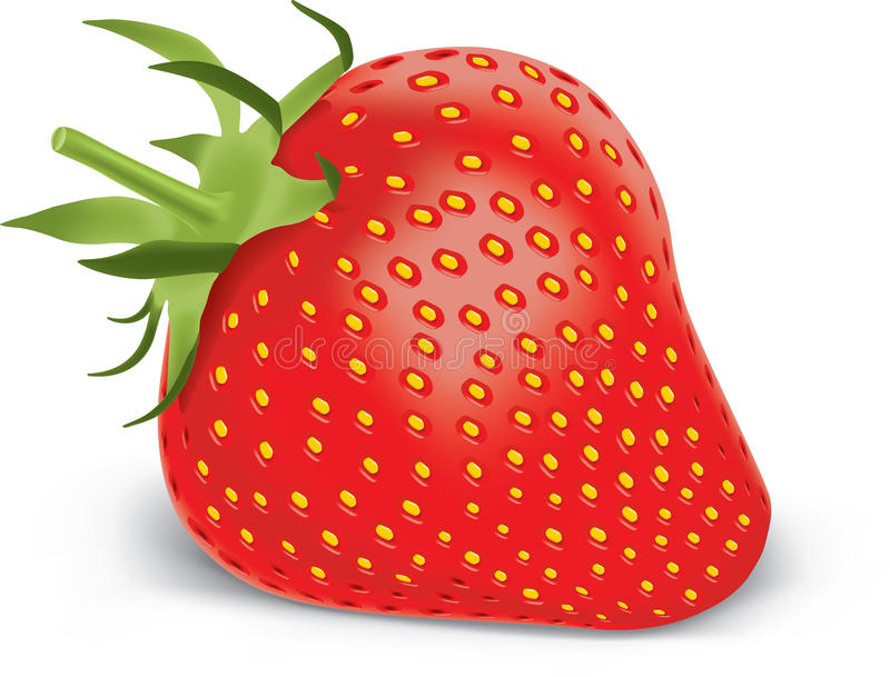 Download Strawberry stock vector. Image of berry, green, fruit - 18598437