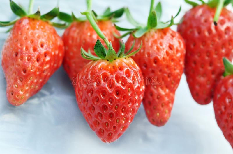 Download Strawberry Royalty Free Stock Photography - Image: 23525587
