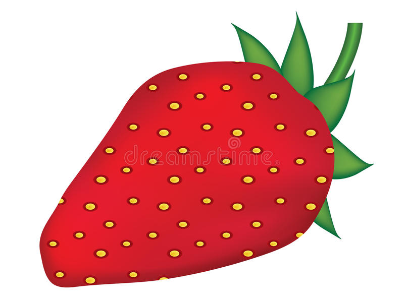 Download Strawberry stock vector. Image of fruit, white, rich - 23562189