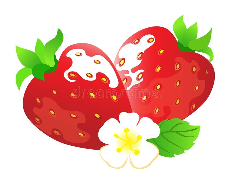 Download Strawberry stock vector. Illustration of ripe, strawberry - 24077467