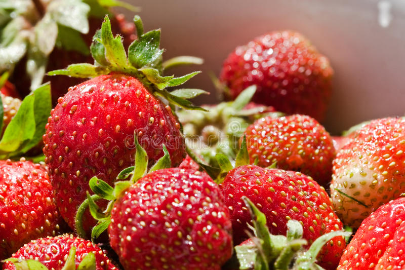 Download Strawberry stock photo. Image of objects, juicy, descriptive - 25990066