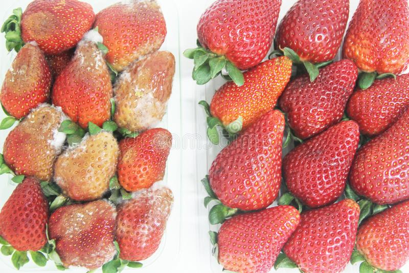 Strawberry food agriculture isolated mold delicious healthful fruit Sao Paulo Brazil stock photography