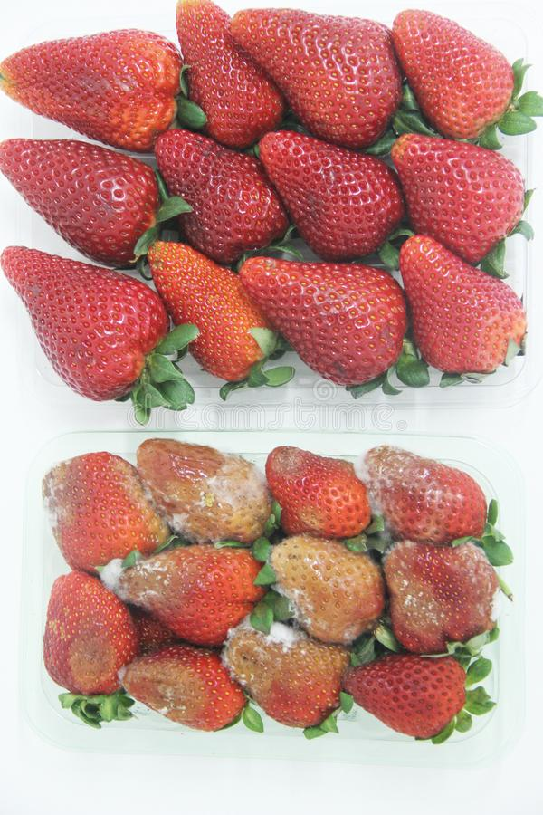 Strawberry food agriculture isolated mold delicious healthful fruit Sao Paulo Brazil stock image