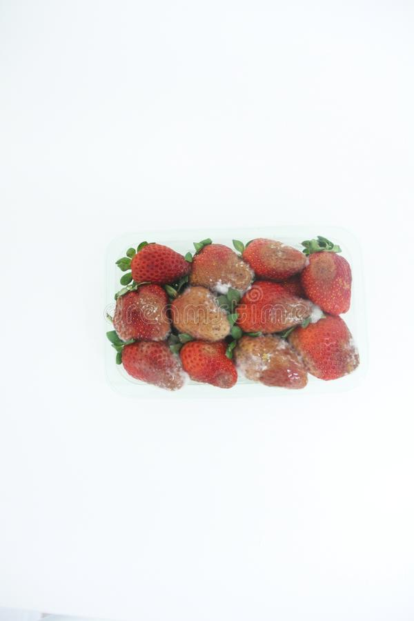 Strawberry food agriculture isolated mold delicious healthful fruit Sao Paulo Brazil royalty free stock photos