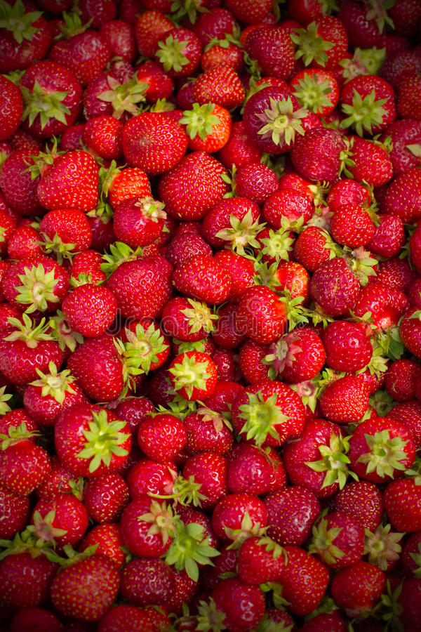 Download Strawberry background stock image. Image of strawberry - 15366757