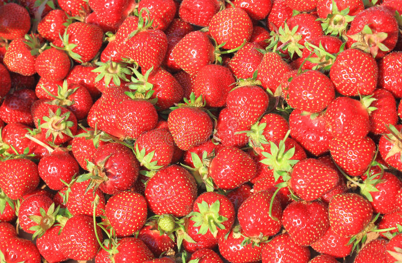 Download Strawberry background stock image. Image of fruits, sweet - 19709867