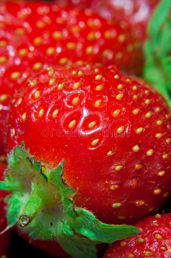 Download Strawberry background stock photo. Image of fresh, healthy - 39504904
