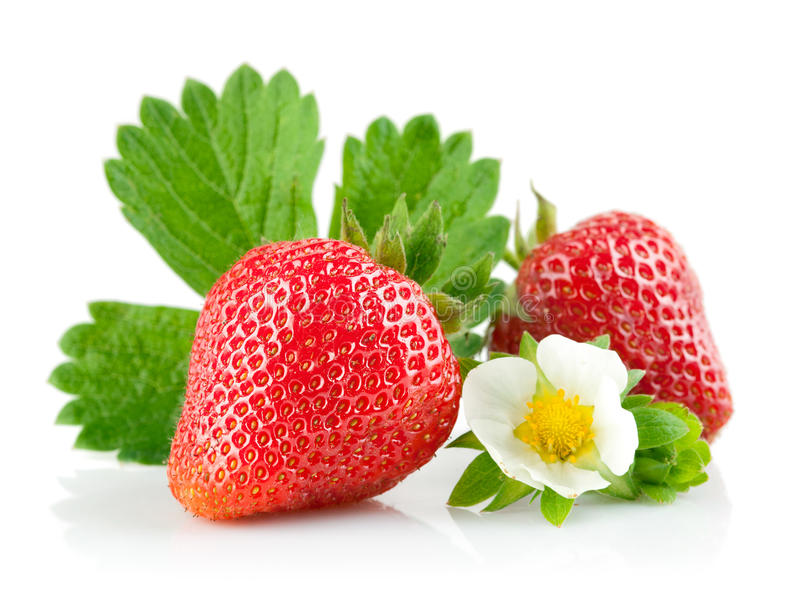 Strawberry Berry With Green Leaf And Flower Stock Image