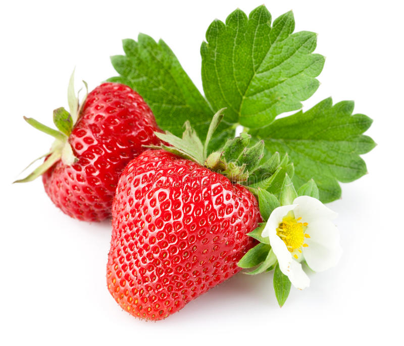 Strawberry berry with green leaf and flower. Isolated on white background stock photos