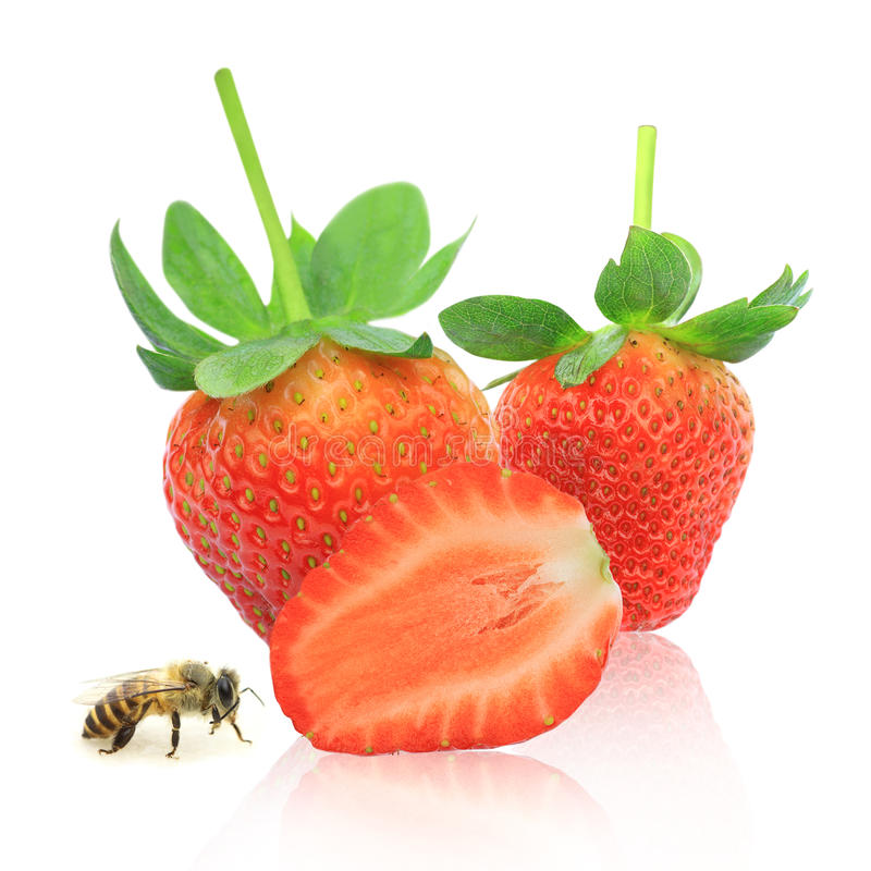 Free Strawberry Berry With Green Leaf And Honey Bee Stock Photos - 22905623