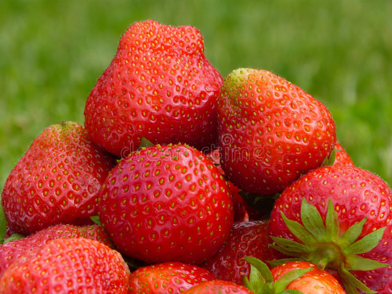 Download Strawberry stock photo. Image of strawberries, green - 31643168