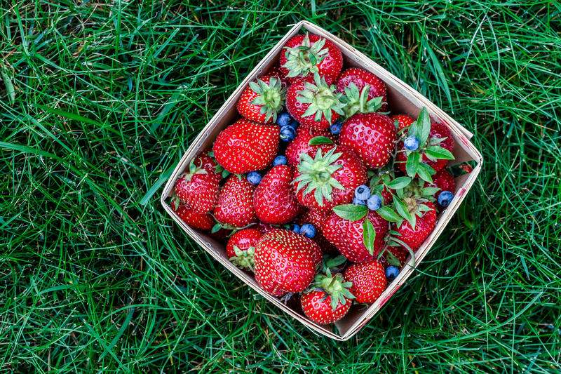Strawberry And Blueberry In Basket Stock Photography