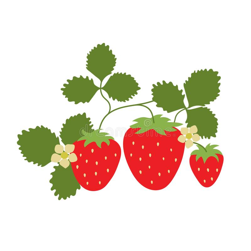 Strawberry on a branch with leaves and a flowers. Vector berry. Natural healthy food. Hand drawn fruit. Vegan menu. Vegetarianism stock illustration