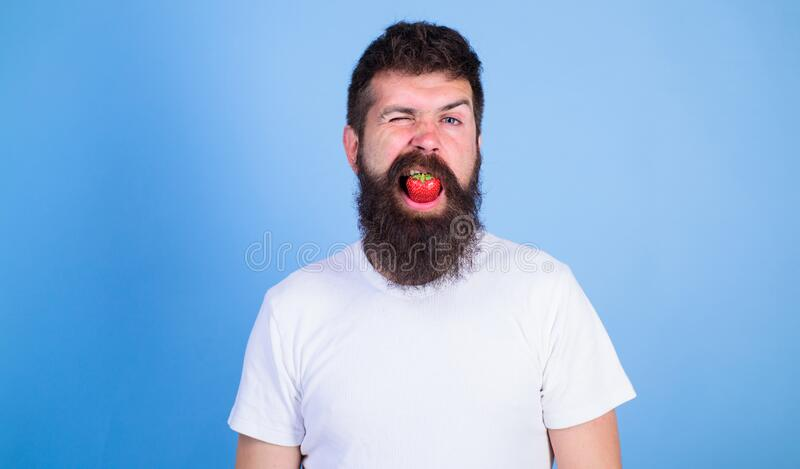Strawberry breath freshener concept. Man handsome hipster with long beard eating strawberry. Freshness comes in red. Berry in mouth of bearded hipster. Hipster stock photos