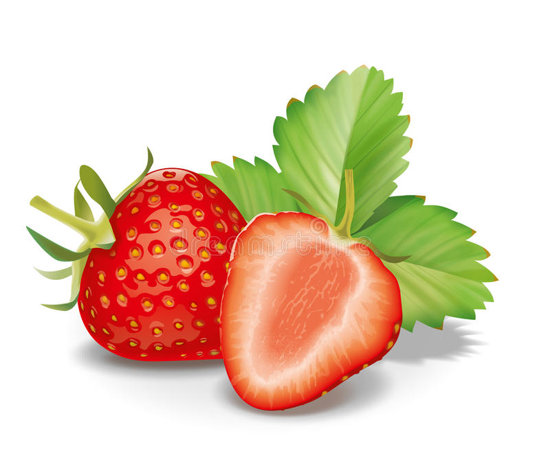 Strawberry. Detailed vector illustartion for best prints and other uses