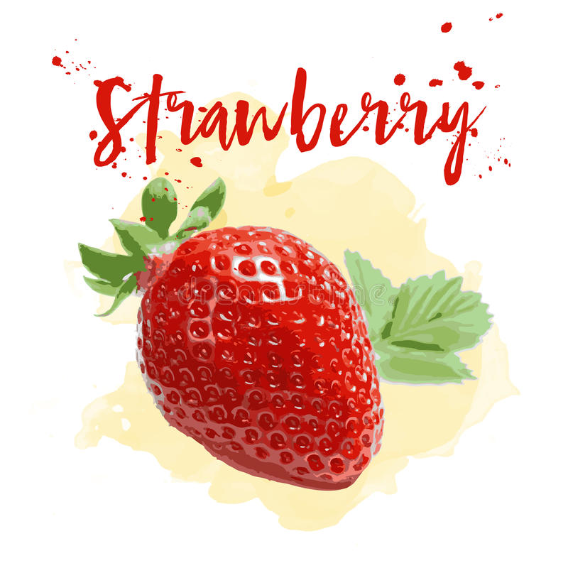 Strawberry drawn in watercolor. Vector Eps 10. Strawberry drawn in watercolor. Vector illustration Eps 10 vector illustration