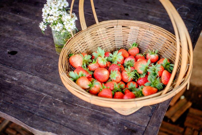 Strawberry in the farm stock photo