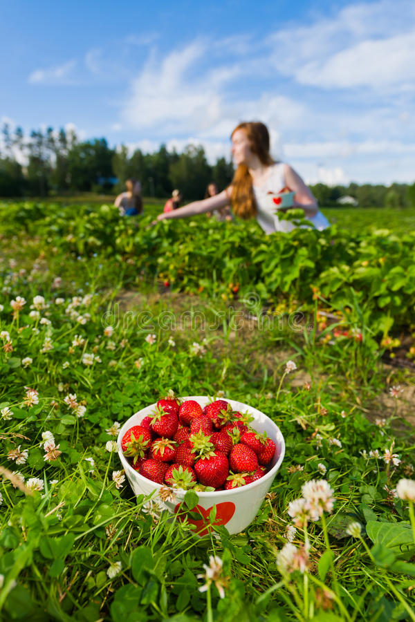 Download Strawberry Field Stock Image - Image: 25780511