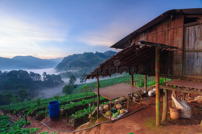 Strawberry field at doi angkhang mountain, chiang mai, thailand. stock photos